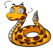Rattlesnake with dizzy face Royalty Free Stock Photography