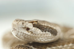 Rattlesnake extreme close-up of head Royalty Free Stock Photos