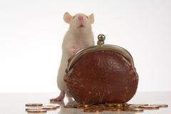 Ratto Fotografia Stock Libera da Diritti