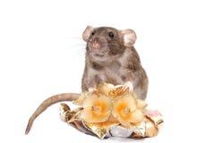 Ratto del broun dell'odore con i fiori della candela Immagini Stock Libere da Diritti