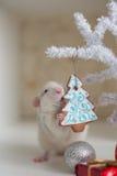 Ratto divertente sveglio su un fondo delle decorazioni di Natale Fotografia Stock Libera da Diritti