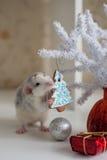 Ratto divertente sveglio su un fondo delle decorazioni di Natale Immagine Stock