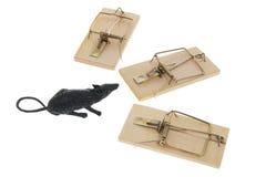 Ratto e Mousetraps del giocattolo Fotografia Stock