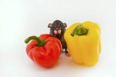 Ratto e peperoni della Camera Immagine Stock