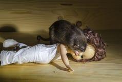 Ratto e una vecchia bambola Immagini Stock Libere da Diritti