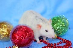 Ratto fra i giocattoli di Natale Nuovo anno felice Horoscope cinese anno di ratto 2020 fotografie stock