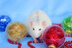 Ratto fra i giocattoli di Natale Nuovo anno felice Horoscope cinese anno di ratto 2020 immagini stock libere da diritti