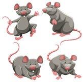 Ratto grigio nelle pose differenti illustrazione di stock