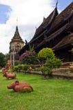 Ratto in Wat Lokmolee in chiangmai Tailandia Fotografia Stock