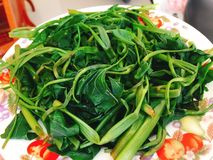 Rau muong or boiled vietnamese morning glory vegetables on dish Royalty Free Stock Photos