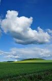 Rauben Sie Blumen unter blauem Himmel und weißen Wolken stockfoto
