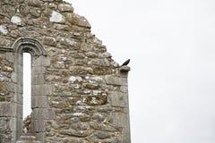Rauben Sie heraus schauen von den Ruinen des alten Klosters Lizenzfreies Stockbild