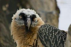 Raubvogel Lizenzfreies Stockbild