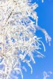 Rauch-Baum Niederlassungen mit Frost auf Hintergrund des blauen Himmels Lizenzfreie Stockbilder