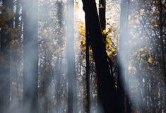 Rauch in den Lichtstrahlen der Sonne Lizenzfreie Stockfotos