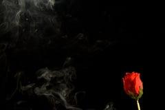 Rauch und Rose Stockfotos