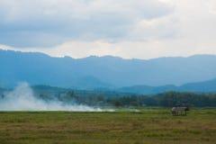 Rauch von einem Waldbrandschuß Stockbilder