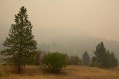 Rauch von Stickpin-Feuer Stockfotos