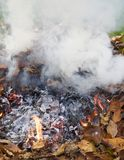 Rauchende Blätter Lizenzfreie Stockbilder