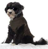Rauchender Hund Stockfotos