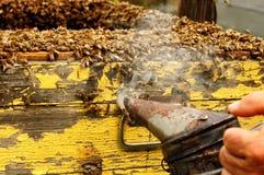 Raucherimkerwerkzeug, zum von Bienen weg von Bienenstock zu halten Stockfotografie