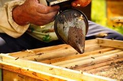 Raucherimkerwerkzeug, zum von Bienen weg von Bienenstock zu halten Lizenzfreies Stockbild