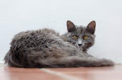 Rauchige Katze Lizenzfreies Stockfoto