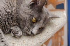 Rauchige Katze Stockfoto
