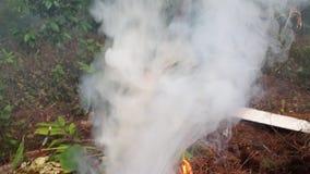 Rauchweiß stock video