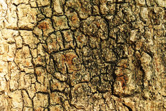 Raue Baum-Barke Lizenzfreie Stockfotos