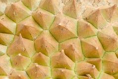 Raue Beschaffenheit der Durianhaut mit den Dornen Lizenzfreies Stockbild