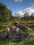 Raue Landschaft stockbilder