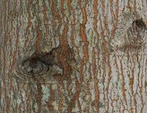 Raue Oberfläche eines Baums Stockfotos
