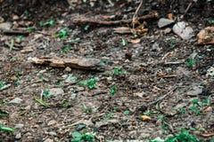 Raue strukturierte Bodenoberfläche gekennzeichnet durch sandigen Boden lizenzfreies stockfoto