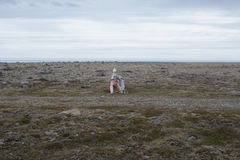 Raufarhofn in IJsland Royalty-vrije Stock Afbeelding
