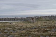 Raufarhofn in IJsland Stock Foto's