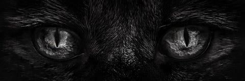 Rauhaariges Monster mustert Nahaufnahme Stockbilder