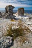 Raukars at Gotland Stock Images
