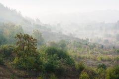 RAUM FÜR BEDECKUNGSschlagzeile UND TEXT Grüne Hügel mit Bäumen im Morgennebel Stockbilder