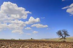 RAUM FÜR BEDECKUNGSschlagzeile UND TEXT Zwischen Apulien und Basilikata: einsamer Baum auf gepflogenem Boden Italien Stockbilder