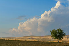 RAUM FÜR BEDECKUNGSschlagzeile UND TEXT Zwischen Apulien und Basilikata: einsamer Baum auf gepflogenem Boden Italien Lizenzfreie Stockfotografie