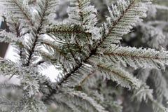 Raureif auf Bäumen Lizenzfreies Stockbild
