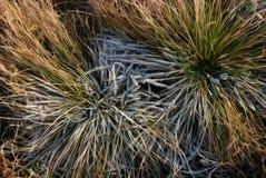 Raureif auf Gras Stockfotografie