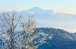 Raureif deckte Bäume im Winterberg ab Lizenzfreie Stockbilder