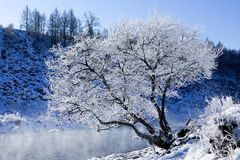 Raureife im Winter, Arshan, Innere Mongolei, China Stockfotos