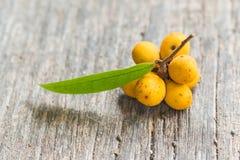 Rauwenhoffia siamensis Scheff fruit Stock Image