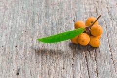 Rauwenhoffia siamensis Scheff fruit Stock Photo