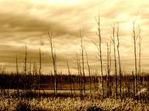Ravaged лес Стоковое Изображение