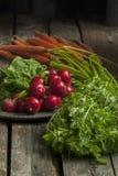 Ravanelli e carote selezionati freschi Fotografia Stock