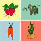 Ravanelli, piselli, carote, cipolle nella raccolta illustrazione di stock